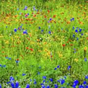 Wildflowers In Bloom Poster