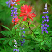 Wildflowers In Mountains Wilderness Poster