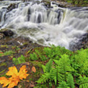 Yacolt Falls In Autumn Poster