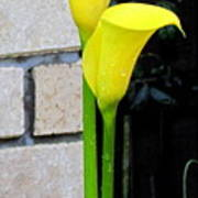yellow Lily. Poster