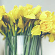 Yellow Narcissuses Bouquet In A Glass Vase Poster