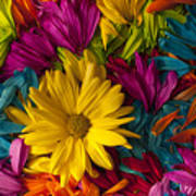 Daisy Petals Abstracts Poster