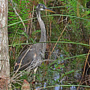 100- Great Blue Heron Poster