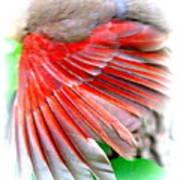 1055-001 - Northern Cardinal Poster