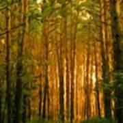 Nature Oil Canvas Landscape Poster