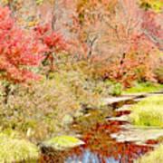 Stream In Autumn, Pocono Mountains, Pennsylvania Poster