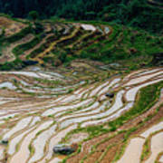 Longji Terraced Fields Scenery Poster