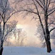 Amazing Landscape With Frozen Snow Covered Trees At Sunrise   Poster