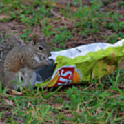 14- Chip Lovin' Squirrel Poster