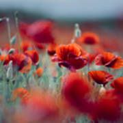 Summer Poppy Meadow Poster