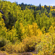 Crystal Creek Autumn Poster