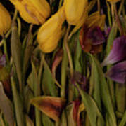 Tulips Wilting Poster