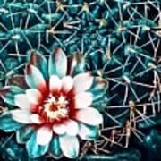 Cacti Poster