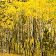 Rocky Mountain Autumn Poster