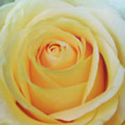 18 Yellow Roses Poster