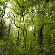 Jungle 1 Poster