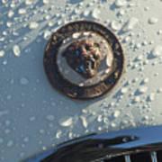 1954 Jaguar Xk120 Roadster Hood Emblem Poster by Jill Reger