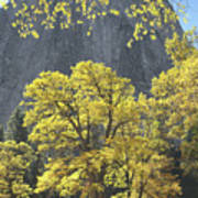 1m6610 Middle Cathedral Rock In Autumn Poster