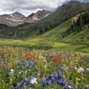 Alpine Flowers In Rustler's Gulch, Usa Poster
