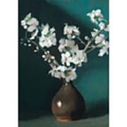 Australian Almond Blossom Poster