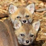 Baby Fox Kits Poster