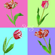 Background With Tulips Poster