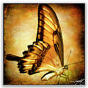 Broad Banded Swallowtail Poster