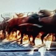 Bull Run Poster
