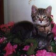 2 Cats In The Flowers Poster