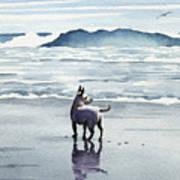 Chihuahua At The Beach Poster