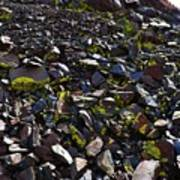 Colorful Lichens Growing On Rocks Along Monument Ridge, In The Eastern Sierra Nevadas Poster