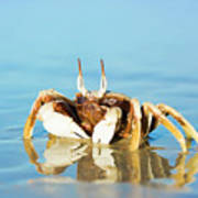 Crab On The Tropical Beach Poster