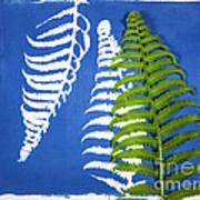 Cyanotype Print, Fern Poster