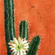 Desert Delight Poster