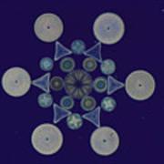 Diatom Arrangement Poster by M. I. Walker