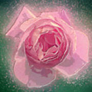 Digitally Manipulated Pink English Rose  Poster