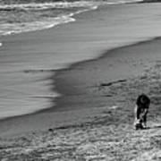 2 Dogs 2 Men Beach  Poster