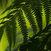 Fern Abstract Poster