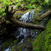 Fern Falls At Jedediah Redwoods State Park Poster