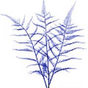 Fern, X-ray Poster