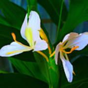 Flowering Plant Poster