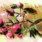 Fruit Of The Wild Rose Poster