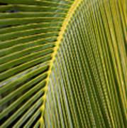 Green Palm Leaf Poster