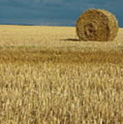 Hay Bales In Harvested Corn Field Poster