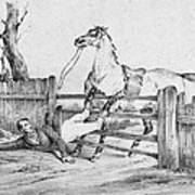 Horserider, C1840 Poster