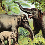 Indian Elephant, Endangered Species Poster