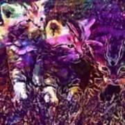 Kittens Cat Cat Puppy Rush  Poster