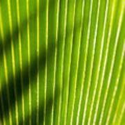 Leaf Close-up Poster