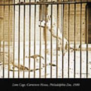 Lion Cage, Carnivore House, Philadelphia Zoo, C. 1900 Poster