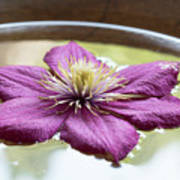 Clematis Flower On Water Poster